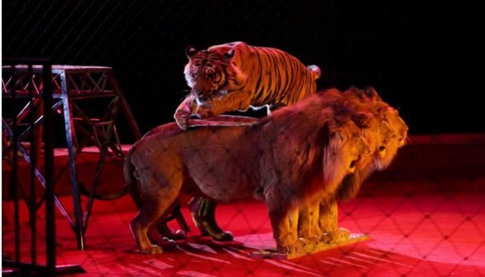Пермский цирк